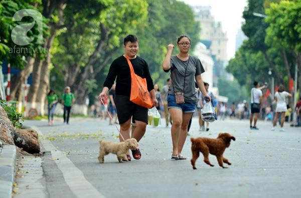 Hà Nội citizens applaud dog muzzling order