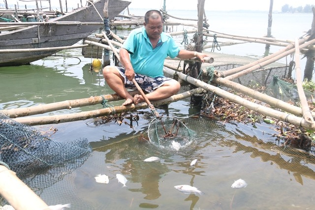 Breeders face woes of yet another mass fish death