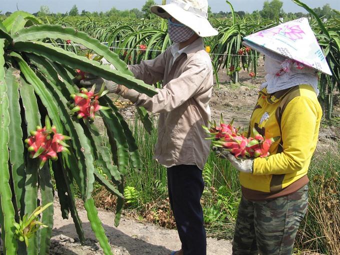 VN firms urged to develop farm brands