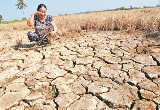 World Bank suggests drought response measures