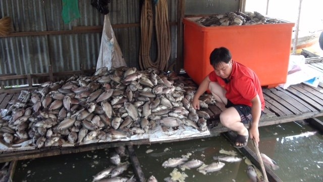 Experts urge action to end mass fish kills