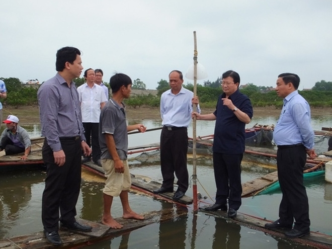 Authorities investigate mass fish die-off in central VN