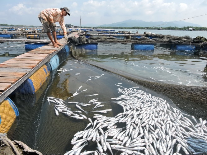 Fish breeders sue seafood firms over pollution claims
