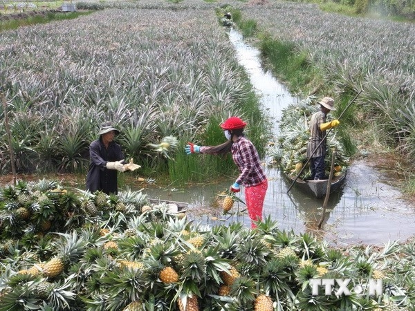Less Mekong Delta fruit higher prices