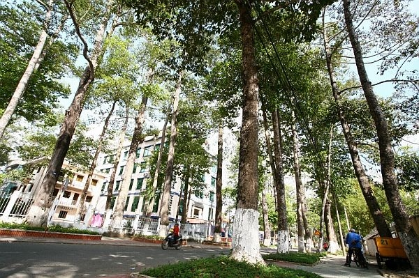 Old trees in Trà Vinh threatened: researchers