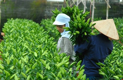 VN can improve flower exports