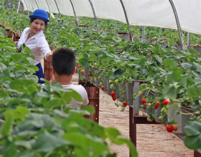 Japan eyes TPP investment in VN agriculture