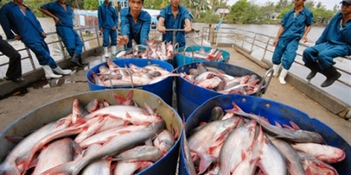 Ministry to set tra fish standards