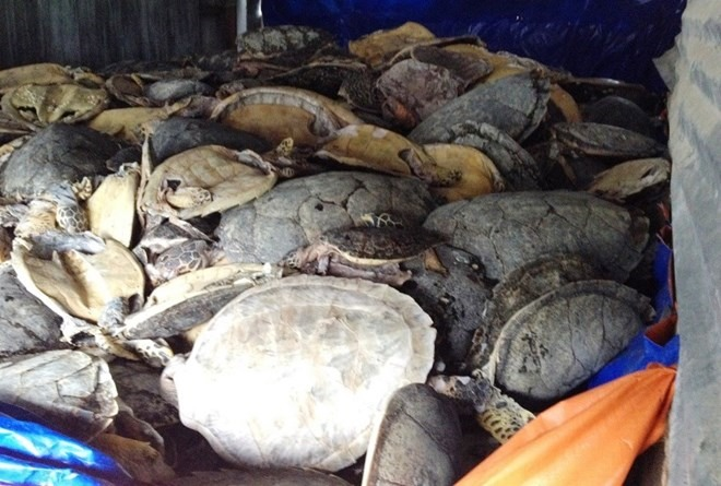 Court to open proceedings against turtle trafficker