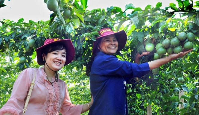 Đà Lạt market hi-tech farming models produce