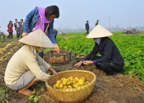 VN yet to sow seeds of low carbon rice