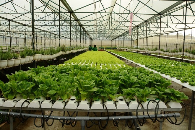 HCM City to continue focus on modern urban agriculture