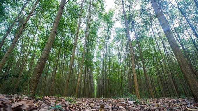 VN sets goals for sustainable forestry development