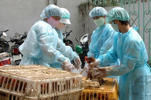 Avian flu prevention project launched