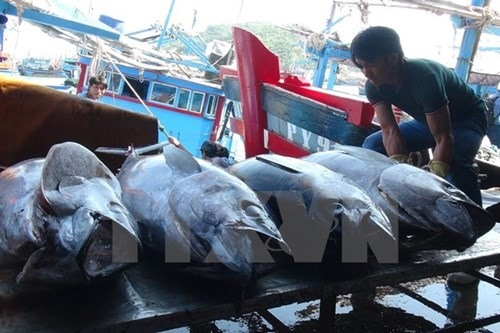 VN China boost fishing sustainability in Tonkin