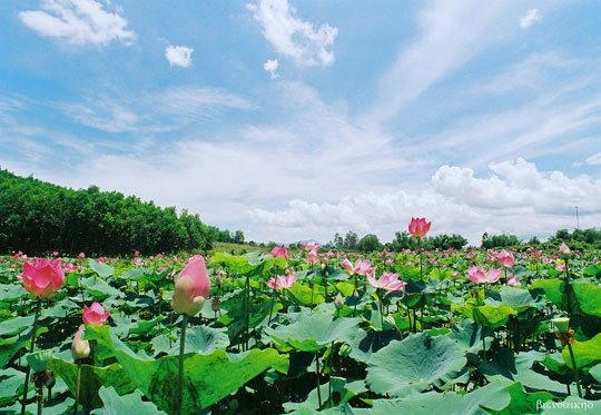 Agro-tourism lures visitors to Mekong Delta province