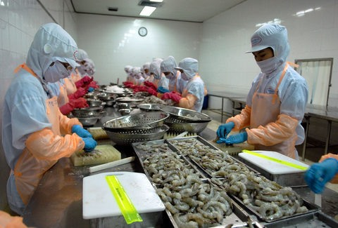 Australia lifts ban on VN uncooked shrimp