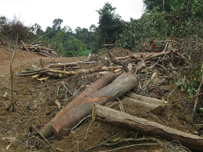 VNForest moots halting harmful projects