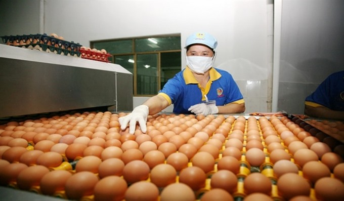 HCM City tracing poultry origins