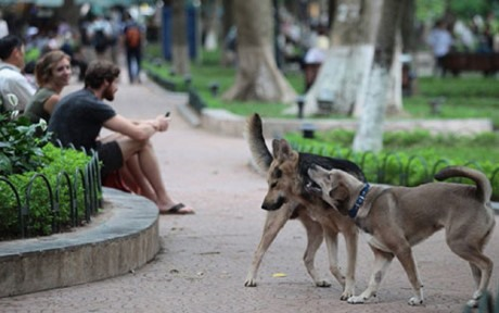 Decree on muzzling dogs changes little in Hà Nội
