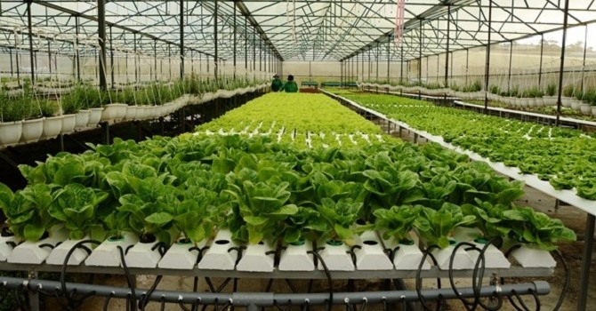Agricultural restructure a success