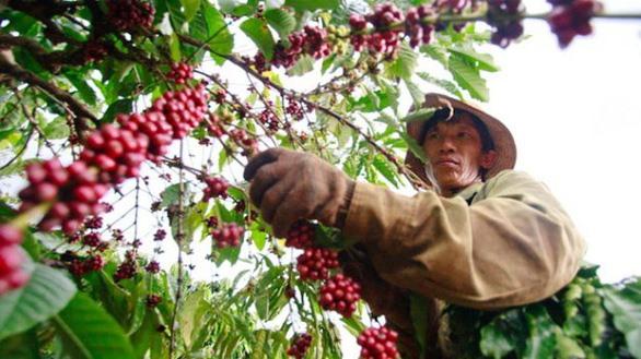 Coffee Day to open in Đắk Nông