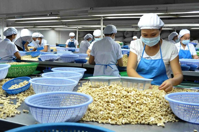 Local cashew industry to face challenges next year