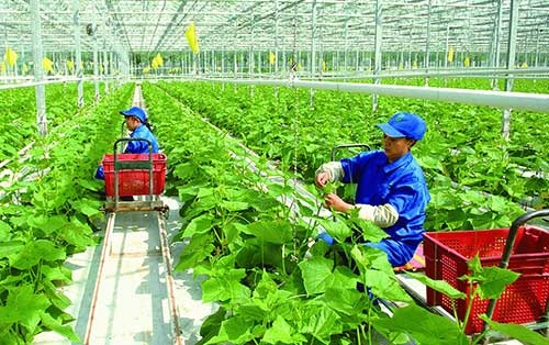 High tech agriculture co-ops are given top priority