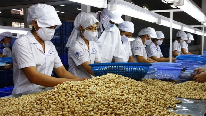 Cashew sector eyes quality