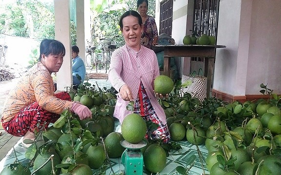 Bến Tre pomelo coconut GI certified