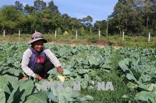Trà Vinh farmers lend farmland for free to poor