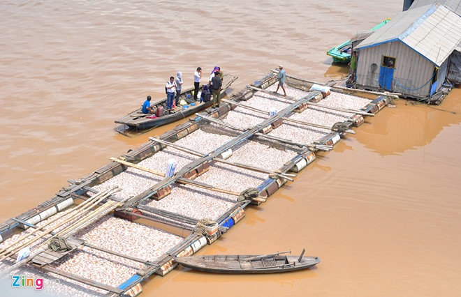 1500 tons of dead fish in Đồng Nai River
