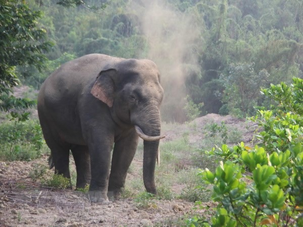 Wild elephants destroy farm products