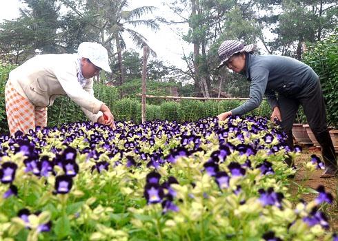 Deltas flower growers prepare for Tết