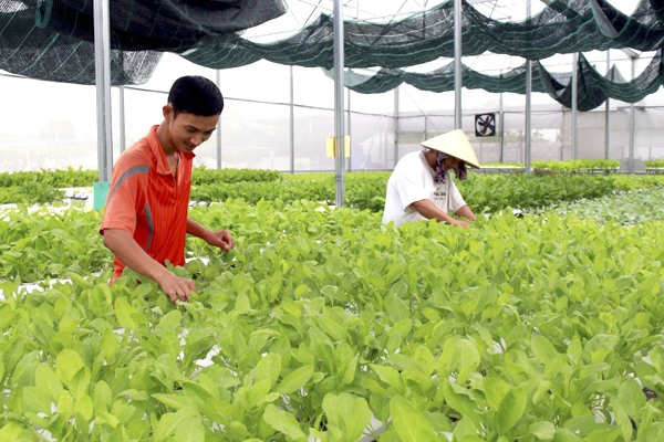 Digitisation boosts Bà Rịa-Vũng Tàu agriculture