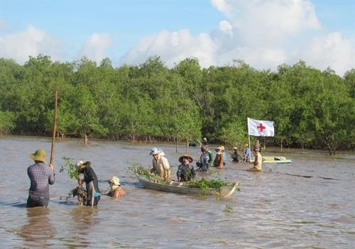 Sóc Trăng forest co-management model helps protect mangroves improve locals incomes