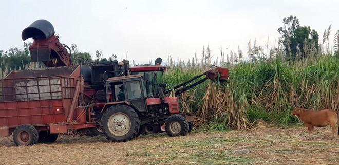 Drought causes big losses to Tây Nguyên farmers