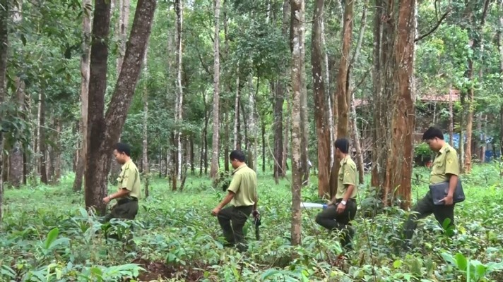 Project to restore Central Highlands forests gets nod
