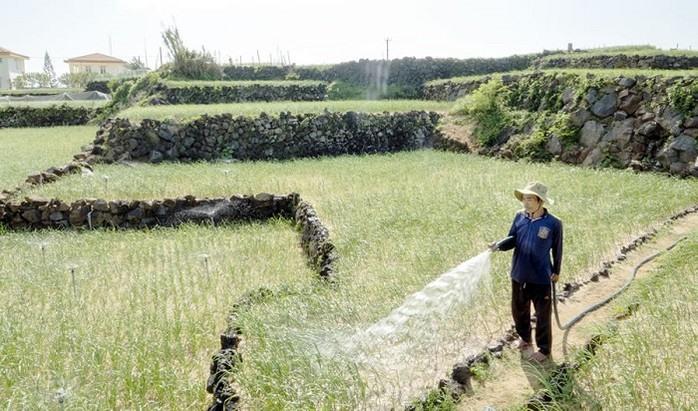 Water shortage threatens Lý Sơn Islanders