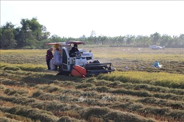 Việt Nam China look to increase rice trade co-operation