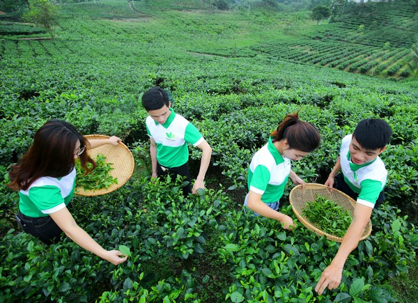 Enterprises see SDGs as key to growth