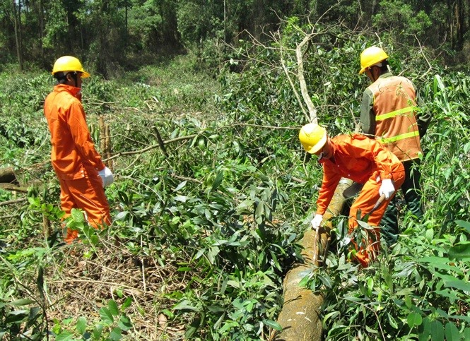 EU funds project to promote sustainable forest management in Quảng Trị