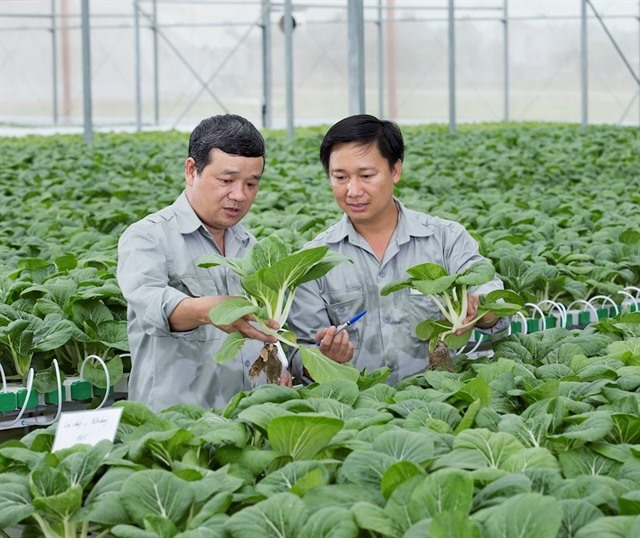 Hà Nội seeks investment for 11 farming projects