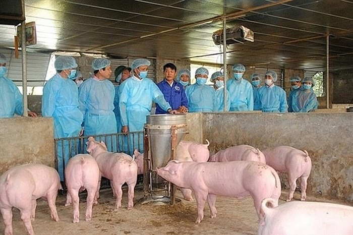 Việt Nam aims to be free of African swine fever by 2025