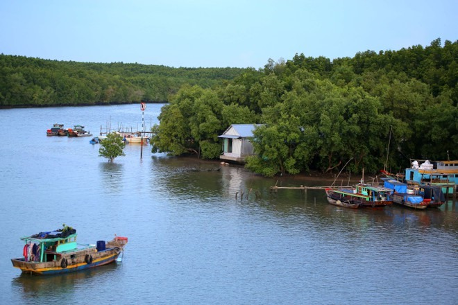 Development wont hurt Cần Giờ Biosphere Reserve says former official