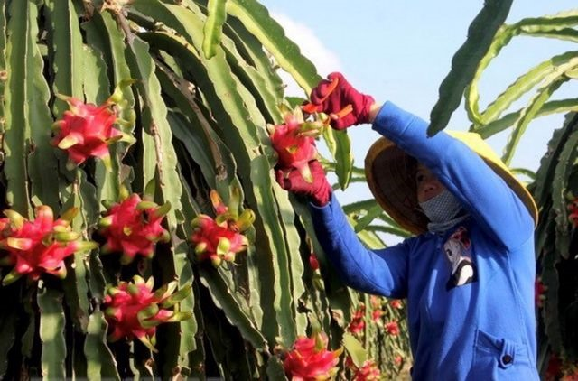 US to send officials to quarantine fruits for export