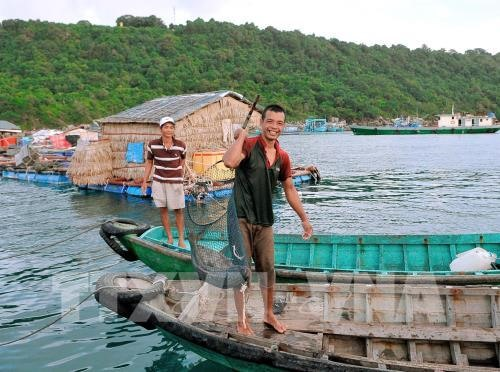 Marine aquaculture brings high profits to Kiên Giang farmers