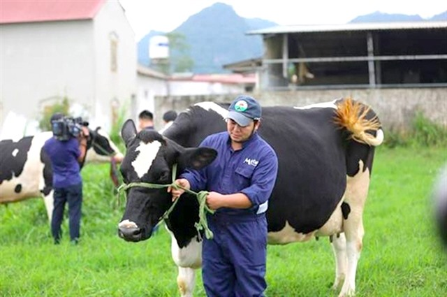 Vinamilk and GTNFoods to buy 39.2 million shares of Mộc Châu Milk