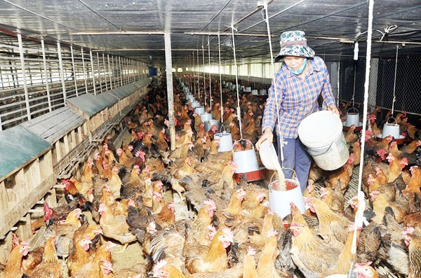 Animal feed prices rise sharply farmers hit hard