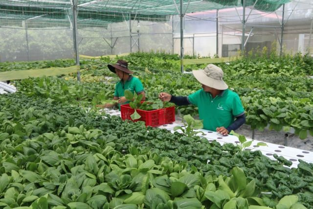 Trà Vinh focuses on developing quality seeds seedlings